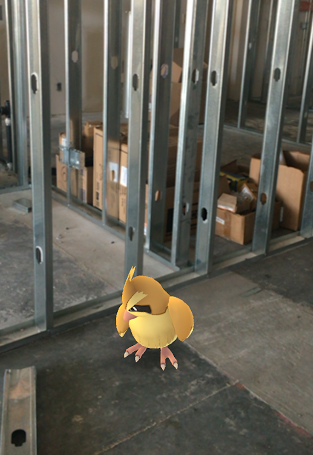 A Pidgey is hanging out among the office construction!